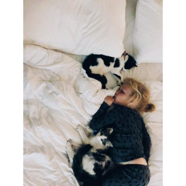 This is a love story Chapter One littlekittiescalledJackandDiane kittensofinstagram itsmefable